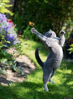 cat jumping for butterfly - Exclusive Tshirt For Pet Lovers - You can find more information at: https://www.facebook.com/pages/Tshirt-For-Pet-Lovers/702483263153915