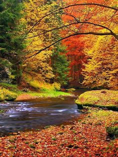 Kamenice River, Czech Republic photo via besttravelphotos