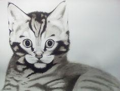 gato, ilustración tinta china
