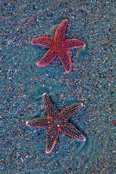Sea stars washed ashore on Folly Beach. Wildlife Travel Guide. Animals Travel Destinations. Travel Tips and Tricks. #nature #wildlife #animals #naturelovers #adventuretime #travelblog #destination #destinationguide #starfish #sea #creatures