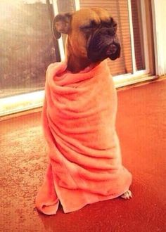 me waking up from a nap, looking for food