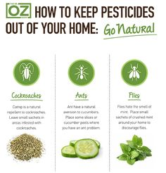 Natural Solutions 2 Keep Bugs outta your Home ~  Catnip = Cockroach repellent  Cucumbers = Ants aversion Mint = Fly discouragement .