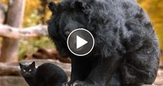 A Massive Bear Sneaks Up On A Tiny House Cat, Seconds Later I Can't Believe My Eye