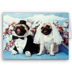 Pug Wedding... @Amber @Amanda Snelson. Can we dress Ziggy and Roxy up like this?