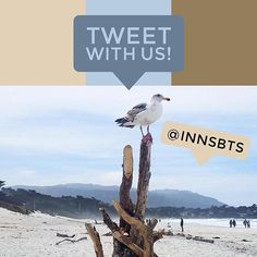 Are you on Twitter? Follow us @innsbts for more fun photos! We love interacting with all followers on all platforms. Comment on this post with your Twitter handle and we will follow you! Happy Wednesday!⠀ .⠀ .⠀ .⠀ .⠀ .⠀ #innsbythesea #carmelbythesea #visitcarmel #beach #ocean #birds #seagull #funny #twitter #followers #community #instalike #instagood #instatravel #travel #hospitality #inns #montereypeninsula #blueskies #vacation #vitaminsea #visithmb #halfmoonbay #visitsantacruz #santacruz…