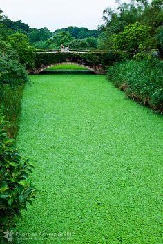 green small river in Yilan #Taiwan