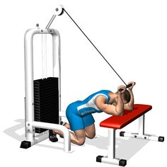 KNEELING CABLE TRICEPS EXTENSION INVOLVED MUSCLES DURING THE TRAINING TRICEPS