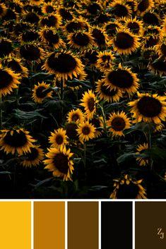 ZJ Colour Palette 238 #colourpalette #colourinspiration