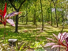 Ninoy Aquino Wildlife and Park, Philippines