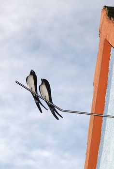 Edelstahlstange als Sitzstange Ceramic Birds, Ceramics Projects, Garden Art, Folk Art, Carving, Swallows, Biscuit, Feather, Inspiration