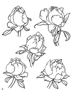 Flower Sketches, Art Sketches, Art Drawings, Peony Drawing, Floral Drawing, Japanese Drawings, Japanese Tattoo Art, Tattoo Illustration, Hand Drawn Flowers