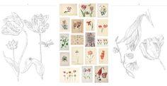 Een aantal pagina's uit Kleurboek No. 3 Bloemen uit het Rijksmuseum Amsterdam. Op de middelste pagina staan de originele prenten en tekeningen!