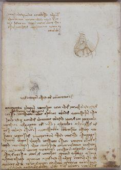 The lumbar vessels and notes on the intestines Leonardo da Vinci (Vinci 1452-Amboise 1519) #TuscanyAgriturismoGiratola