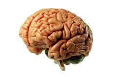 modelo-del-cerebro.jpg (630×425)