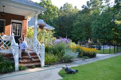 Side of house; kitchen garden with pool in background.  Late July in Virginia.