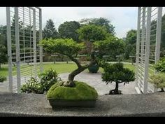 bonsai garden background suitable with bonsai garden benches suitable with bonsai & beyond garden centre Q Garden, Bonsai Garden, Home And Garden, Pine Bonsai, Dancing Day, Nature Animals, Topiary, Cactus Plants, Lawn