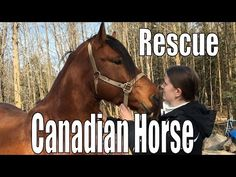 Canadian Horse Rescue - November 2015 - Meeting Tomorrow the first and s...
