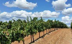 Qué es mejor la Ribera o la Rioja?