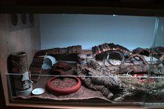 hamster cage setup idea