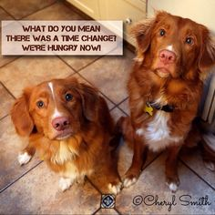 That darn time change plays havoc on my Nova Scotia Duck Toller's internal clocks. :-)