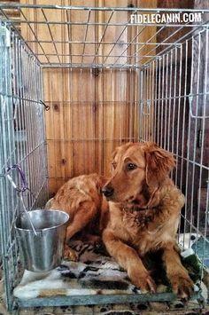 Pour bien des gens, il est cruel de mettre un chien dans une cage. Mais saviez-vous que la cage peut devenir un refuge pour votre chien, un lieu sécuritaire pour lui ainsi qu'un puissant outil du contrôle de son environnement ? Note: les informations...