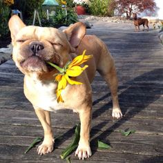 They'll help you to appreciate the beauty of springtime flowers... | 16 Ways Your Pets Make Springtime Awesome