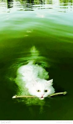 This picture really caught my attention. No, it wasn't the kitty retrieving a stick though it is adorable.