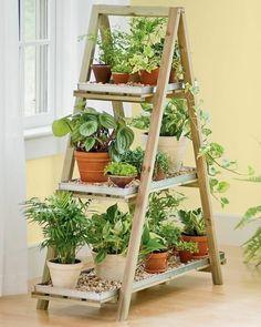 escadote usado como estante de plantas