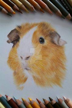Guinea Pig coloured pencil drawing.  by SusansAnimalArt
