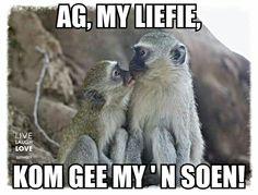 Gee my 'n soen!