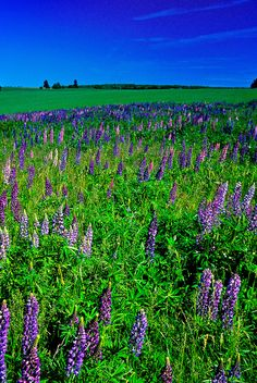 Near North Granville ~ Prince Edward Island, Canada