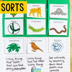 10 Ideas for Science Vocabulary Vocabulary Activities, Vocabulary Words, Learn Science, Science Penguin, Penguin Animals, Earthworms, Elementary Science, Photosynthesis, Student Learning
