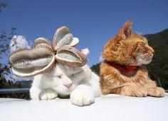 あけび   のせ猫オフィシャルブログ Powered by Ameba