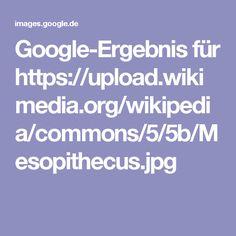 Google-Ergebnis für https://upload.wikimedia.org/wikipedia/commons/5/5b/Mesopithecus.jpg
