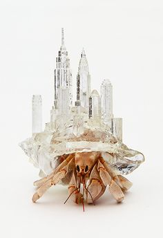 Artist Aki Inomata designed intricate 3D printed shells for hermit crabs.