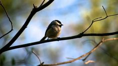 beautiful pictures of bird Bird Wallpaper, Full Hd Wallpaper, Kinds Of Birds, 4k Uhd, Small Birds, Hd Desktop, Beautiful Pictures, Animals, Backgrounds