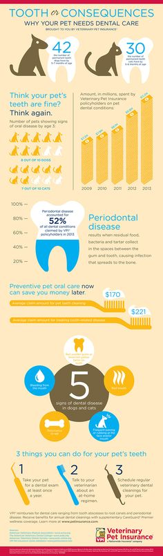 Why Cats and Dogs Need Dental Care — an Infographic
