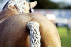 Horse tail diamond waffle braid.  Easter Show - Autumn 2014