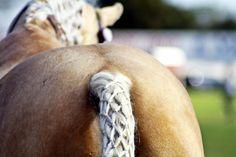Horse tail diamond waffle braid.  Easter Show - Autumn 2014