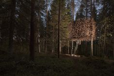 Overnachten in Het Vogelnest van het Treehotel in Zweden