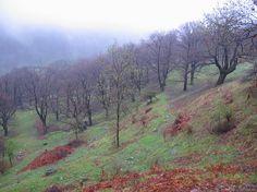 Passo d'Agario, endo of April Switzerland, Hiking, Country Roads, Green, Walks, Trekking, Hill Walking