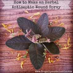 Herbs for First Aid: A Recipe for a First-Aid Antiseptic Wound Spray