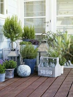 Old milk bottles, potted herbs and lanterns potted herbs, terrace ideas, balcony ideas Back Gardens, Outdoor Gardens, Indoor Gardening, Vegetable Gardening, Container Gardening, Organic Gardening, Wood Chips Garden, Jardin Decor, Terrace Garden