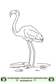 another flamingo coloring page