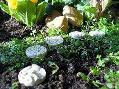Kigi Nursery - Miniature Stepping Stones (MED) Buff (Set of 5), $8.00 (http://www.kiginursery.com/stepping-stones-med-buff-set-of-5/)