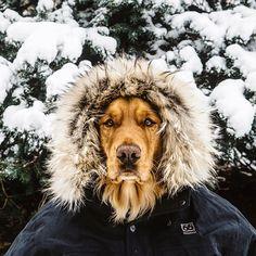 19 Zdj Ktre Dowodz e Pies To Najlepszy Przyjaciel Czowieka  Interesujacecom