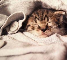 Snuggly warm!
