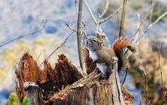 #ardillas, #muñón, #el desenfoque de movimiento, #musgo, #ramas, #naturaleza, #plantas