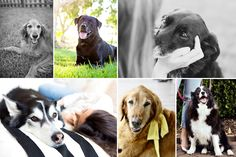 Must have! Senior Dog Checklist - Everything you need to keep your 7+ year old dog happy and healthy in their later years. | Pretty Fluffy | www.prettyfluffy.com