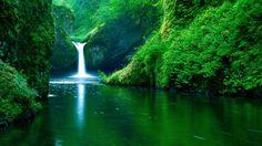 wallpaper Rainforest Borneo - Google 検索